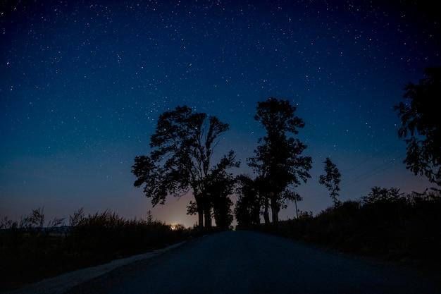 Bellissimi alberi nel mezzo della strada di notte Foto Premium