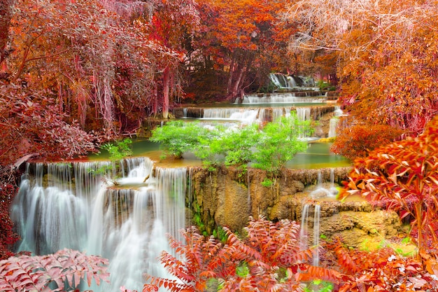 Bella cascata nella foresta profonda Foto Premium