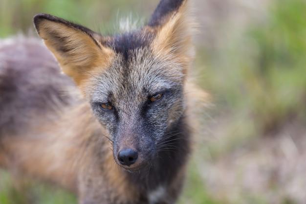 Bellissimo animale selvatico nella foresta Foto Premium