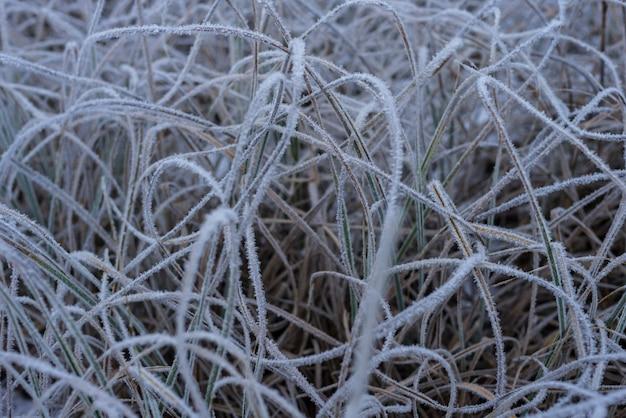 Bellissimo sfondo invernale, brina su una palude Foto Premium