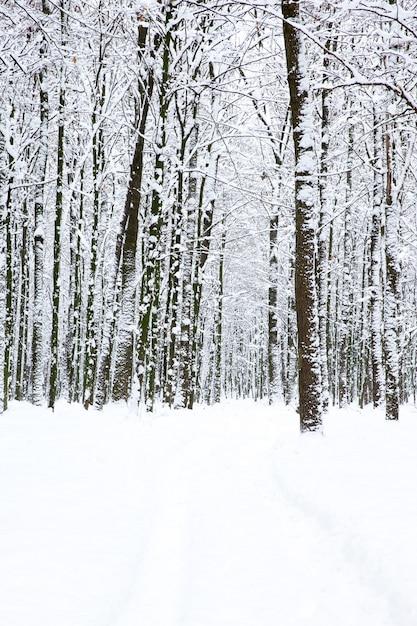 Bella foresta invernale e la strada Foto Premium