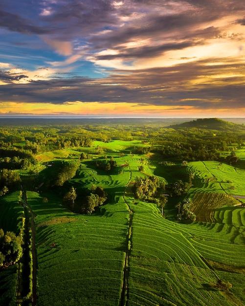Bellezza veduta aerea risaie verdi nella campagna dell'indonesia Foto Premium