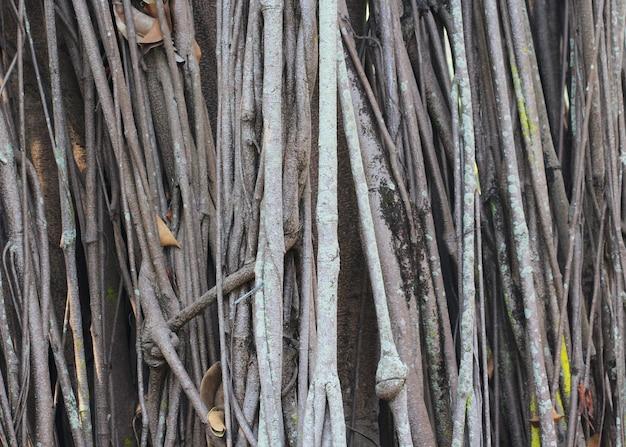 Grande radice dell'albero Foto Premium