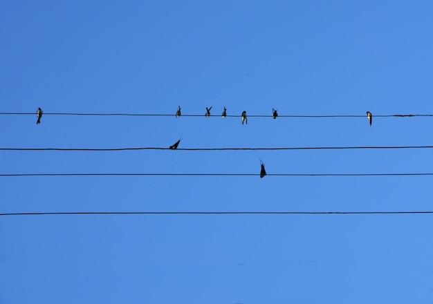 Gli uccelli si siedono sui fili Foto Premium