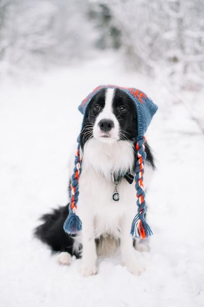 Bianco e nero border collie cane nella foresta innevata Foto Premium