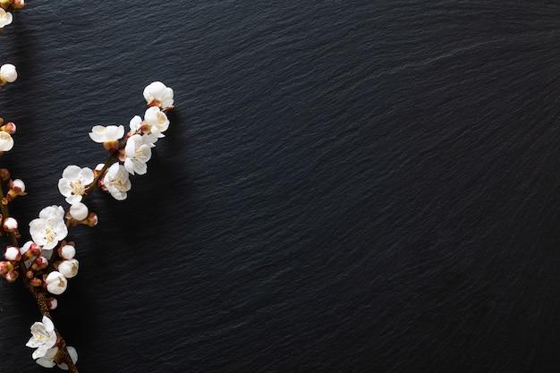 Il fondo di legno nero decora dal fiore del germoglio della prugna Foto Premium