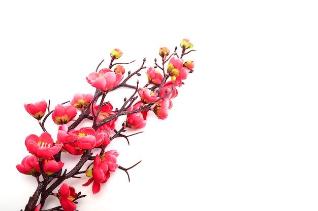 Ciliegio in fiore con rosa brillante Foto Premium