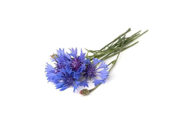 Fiordalisi blu isolati su sfondo bianco Foto Premium