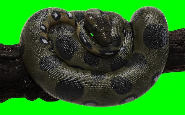 Boa constrictor green anaconda con clipping path. Foto Premium