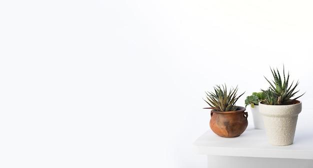 Concetto delle piante botaniche con lo spazio della copia Foto Premium