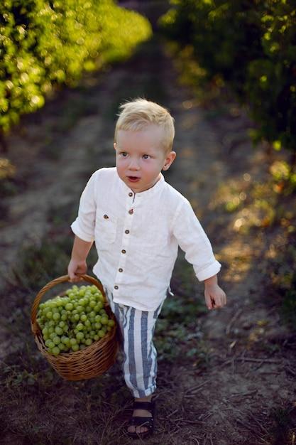 Ragazzo bambino biondo al tramonto porta un cesto di uva verde nella vigna Foto Premium