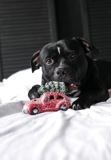 Un ragazzo abbraccia un cane che gioca un giocattolo di natale Foto Premium