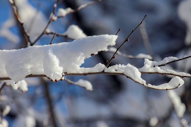 Rami di alberi coperti di neve in inverno Foto Premium