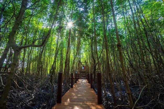 Modo di camminata di legno del ponte nella mangrovia della foresta in chanthaburi tailandia. Foto Premium