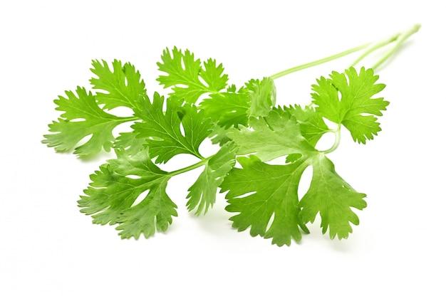 Mazzo di foglie di coriandolo isolate su superficie bianca Foto Premium