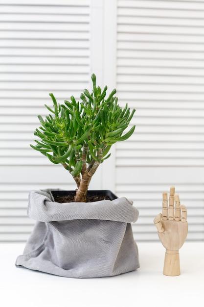 Cactus e mano di legno decorativa all'interno Foto Premium