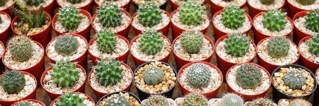 Cactus in vaso nel negozio di piante Foto Premium