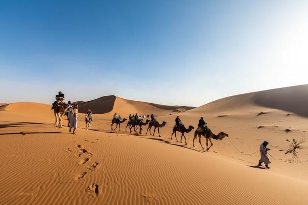 Una carovana di cammelli con una guida naviga attraverso il deserto fino al marocco Foto Premium