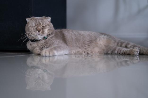 Gatto piccolo gatto sveglio che dorme sul divano nel mio sogno perfetto gatto di casa Foto Premium