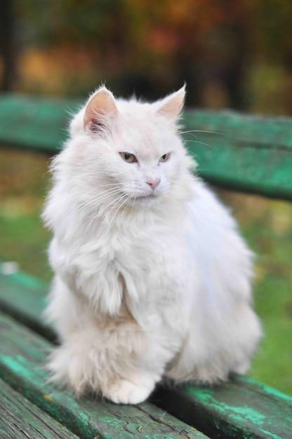 Il gatto si siede su una panchina in autunno Foto Premium
