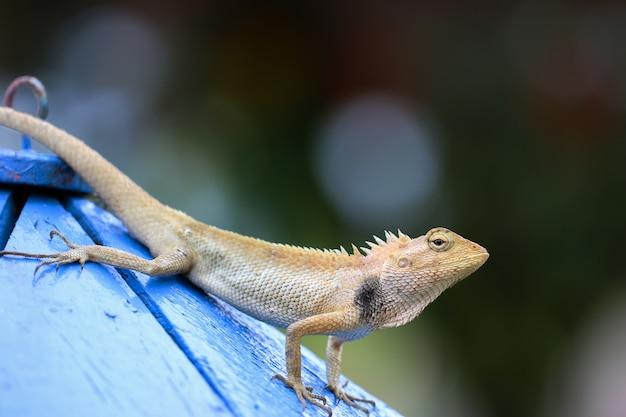 Un camaleonte in piedi su un palo Foto Premium