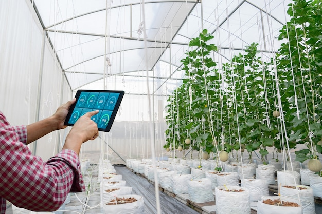 Verifica la qualità della crescita delle piante in azienda agricola con tecnologia biologica vegetale da piantare in azienda a vivaio ambientale Foto Premium