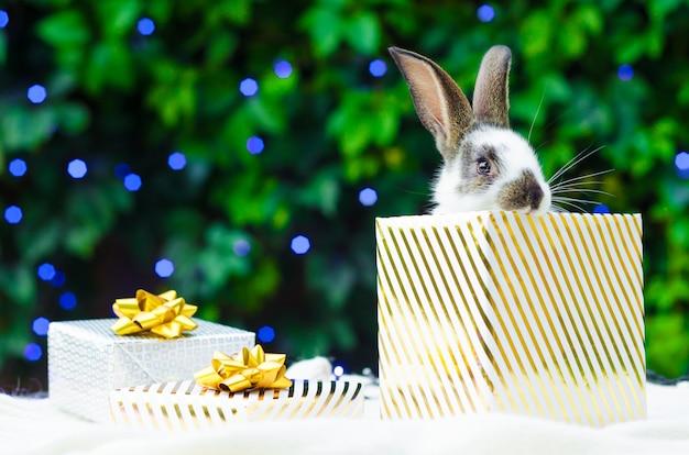 Regalo di natale con un coniglio da compagnia Foto Premium