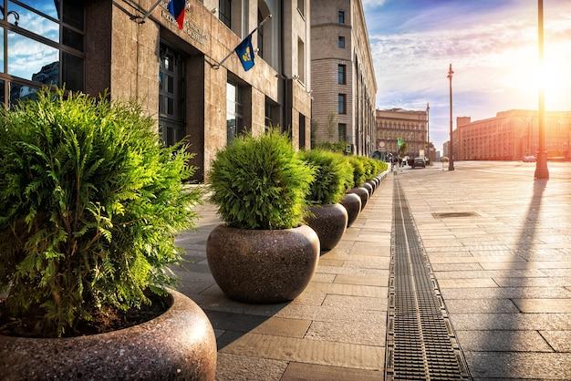 Le aiuole cittadine con piante di abete sempreverdi sono per le strade di mosca. Foto Premium