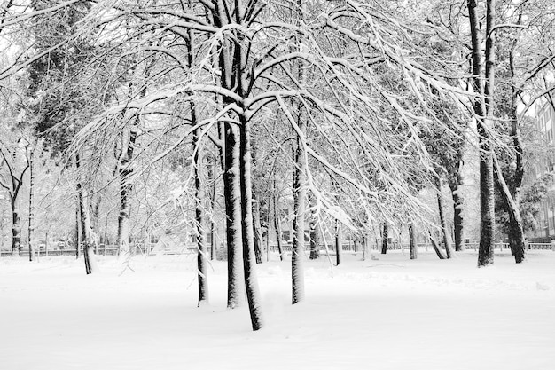 Parco cittadino dopo la nevicata. immagine grafica in bianco e nero del w Foto Premium