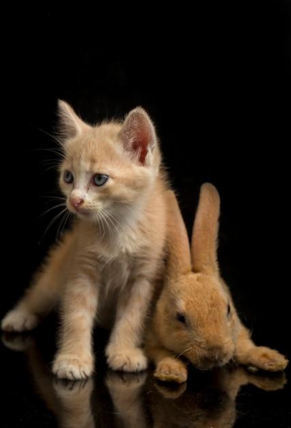 Primo piano di un bellissimo gattino arancione e un simpatico coniglio Foto Premium