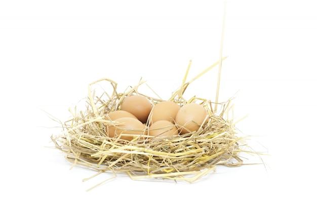 Lo studio isolato uova del primo piano ha sparato su fondo bianco Foto Premium