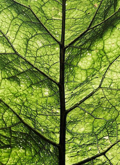 Struttura fresca verde del fondo della foglia del primo piano Foto Premium