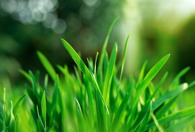 Primo piano su erba verde con gocce d'acqua Foto Premium
