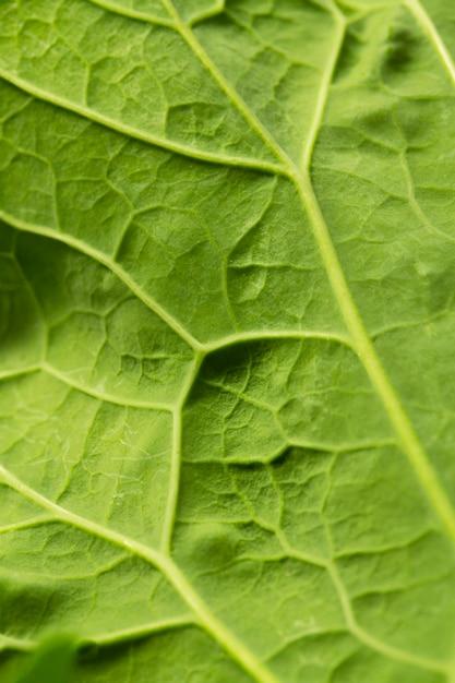 Close-up foglia verde nervi Foto Premium