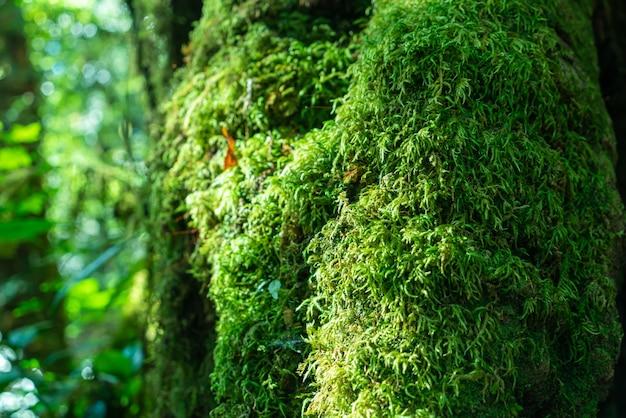 Primo piano muschio verde su albero nella foresta Foto Premium