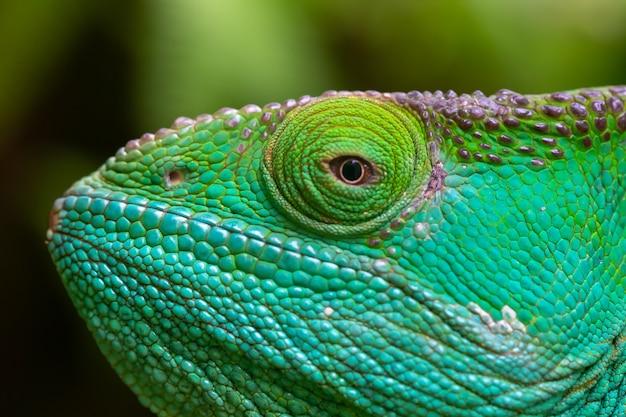 Un primo piano, ripresa macro di un camaleonte verde Foto Premium