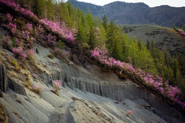 Primo piano delle montagne con gli arbusti da fiore e gli alberi verdi sui pendii. parte della montagna è crollata verso il basso, la fetta visibile della montagna. Foto Premium