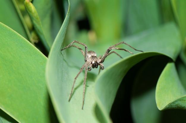 Chiuda in su del ragno nel giardino Foto Premium