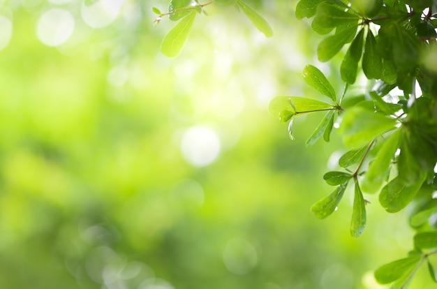 Vista ravvicinata della foglia verde sulla vegetazione offuscata e la luce del sole in giardino utilizzando per pianta verde naturale Foto Premium