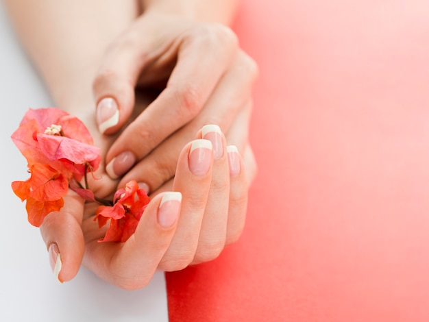 Chiuda sulle mani della donna che tengono i fiori Foto Premium