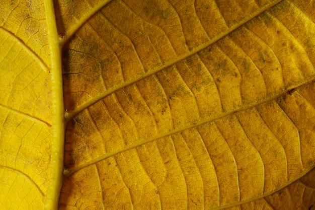 Close-up foglia gialla nervi Foto Premium