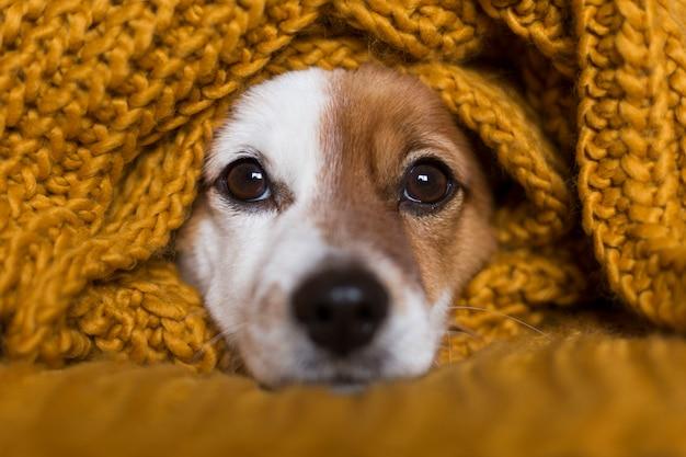 Ritratto del primo piano di piccolo cane sveglio che si siede sul letto Foto Premium