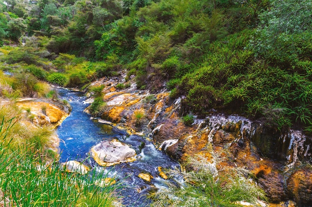 Fiume variopinto in valle vulcanica di waimangu, nuova zelanda Foto Premium