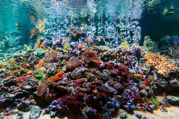 I bei pesci esotici tropicali variopinti nuotano fra le barriere coralline e le alghe Foto Premium