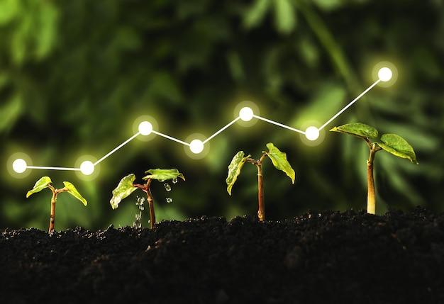 Concetto di crescita aziendale, profitto, sviluppo e successo. la piantina sta crescendo dal terreno fertile. Foto Premium