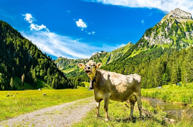 Mucca a oberseetal nelle alpi svizzere Foto Premium