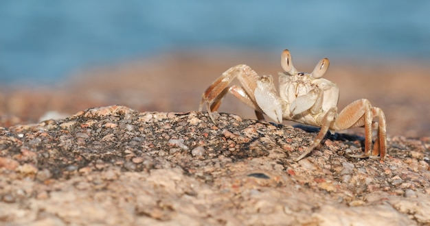 Spiaggia di sabbia di granchio Foto Premium