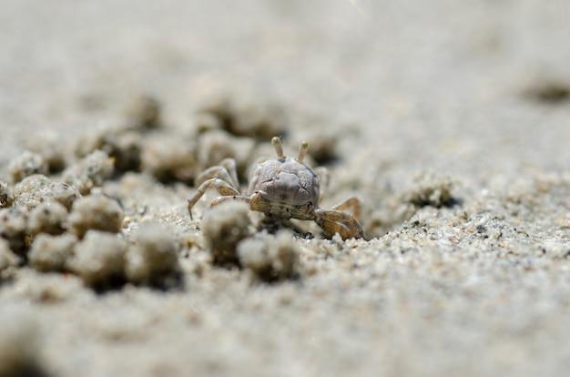 Granchi e granelli di sabbia sulla spiaggia con sfondo sfocato. Foto Premium