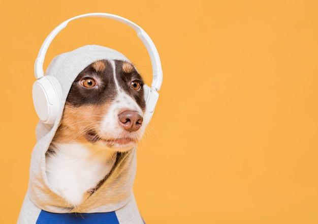 Simpatico cane con un costume Foto Premium