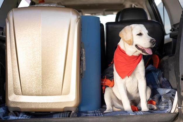 Simpatico cane con bandana rossa seduto in macchina Foto Premium